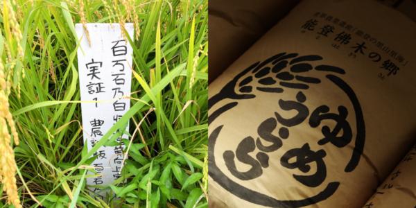 ゆめうららの百万石乃白 石川県奥能登の日本酒酒蔵 数馬酒造