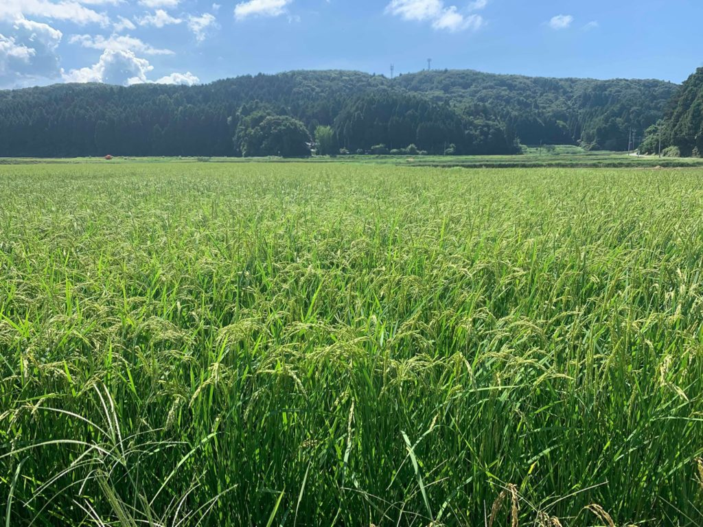 世界農業遺産に認定される美しい能登の田園風景